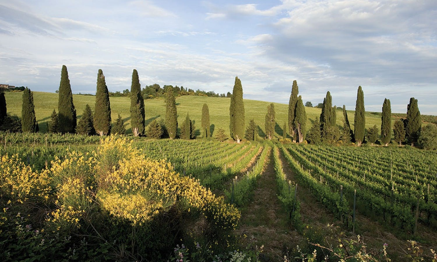 Pisa, Siena, San Gimignano and Chianti: Day Tour in Tuscany with Typical Lunch