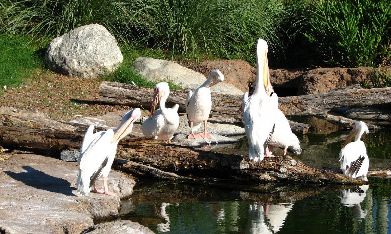 Temaiken Zoo: Visita guiada de Buenos Aires