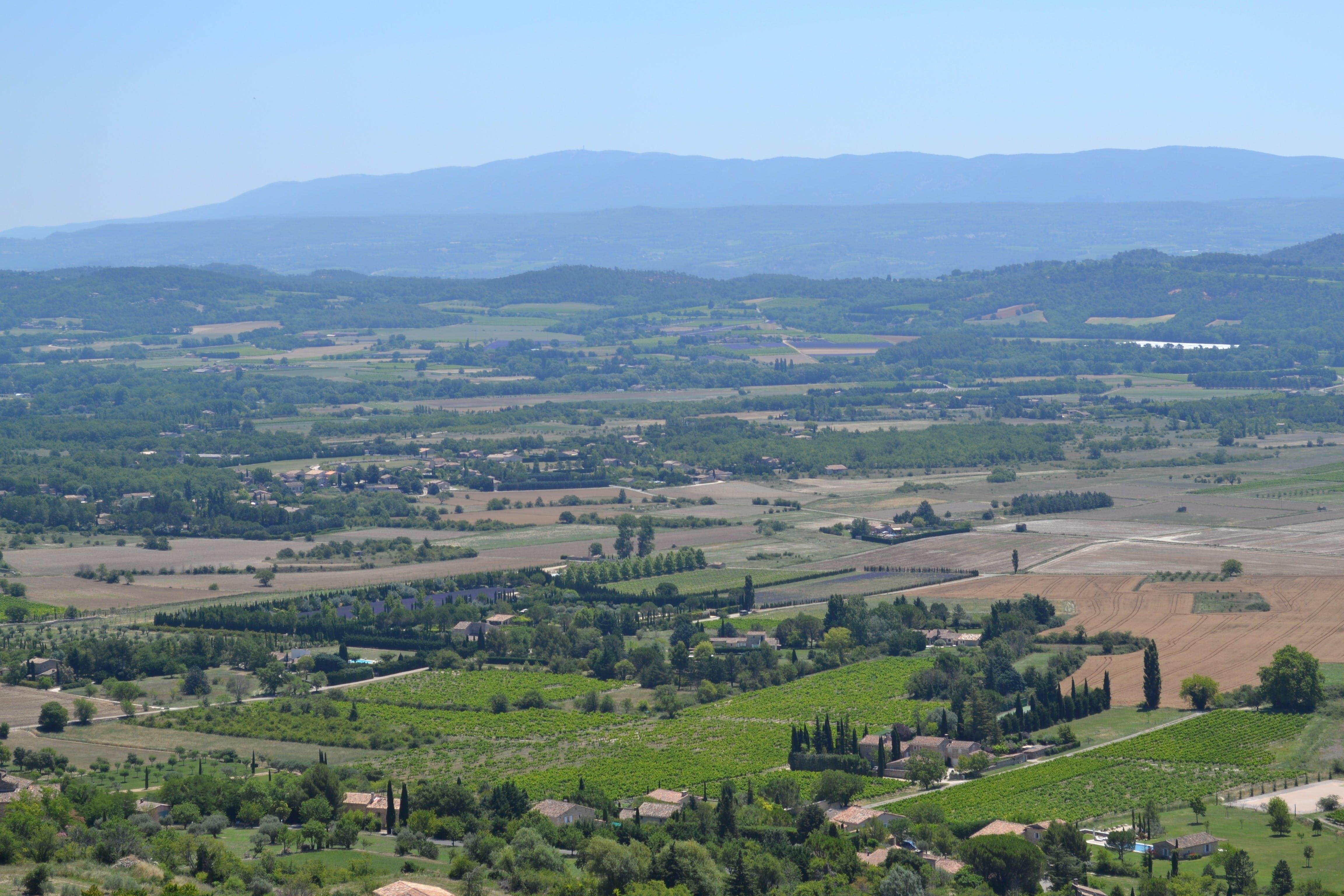 Oliva y cata de vinos en Les Baux de Provence-2