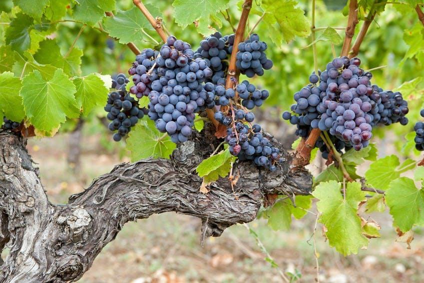 Oliva y cata de vinos en Les Baux de Provence-5