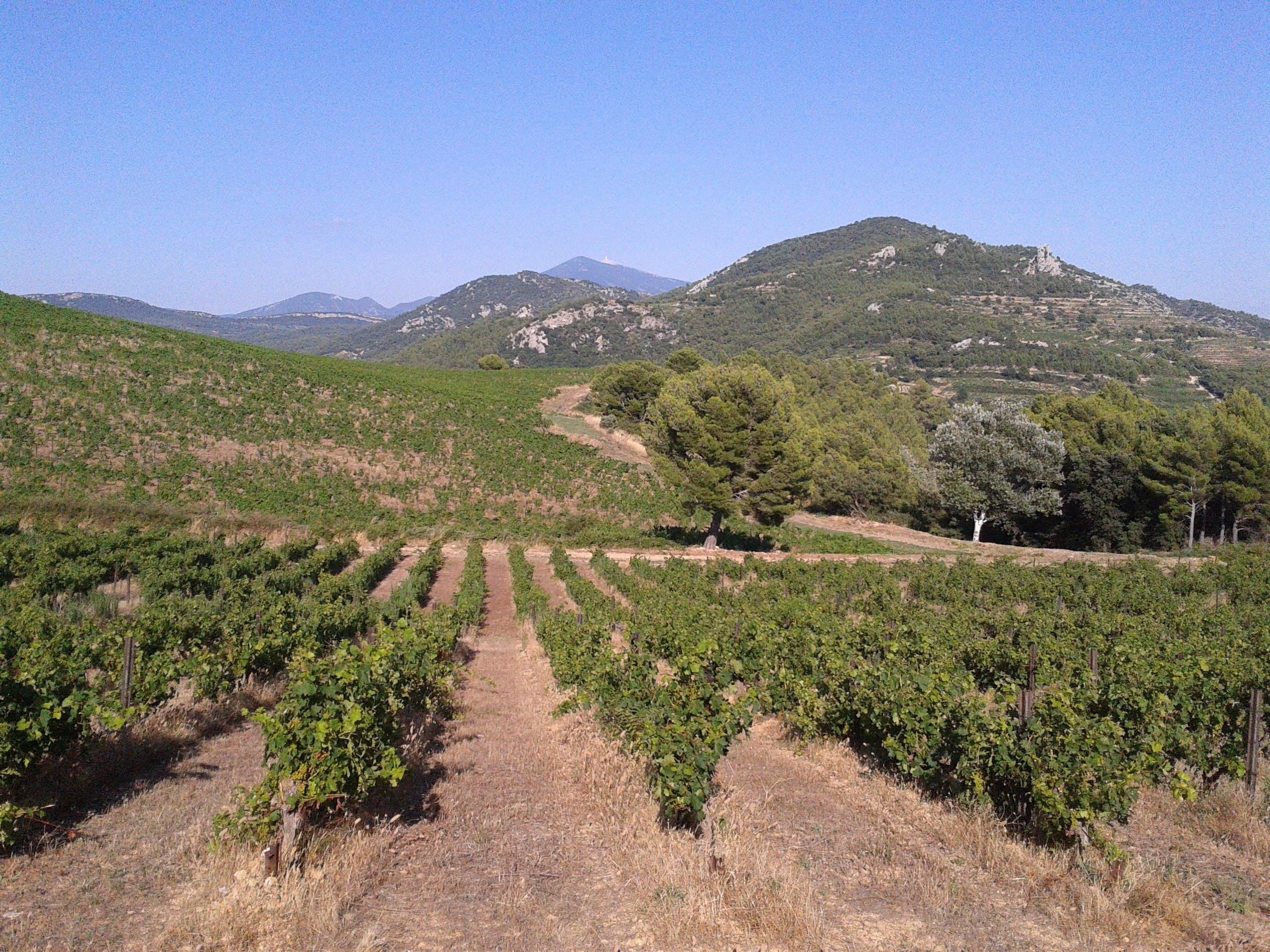 Oliva y cata de vinos en Les Baux de Provence-6